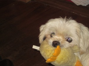 My Butterfly, with her Duckie