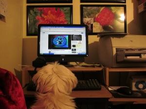 Butterfly at the computer