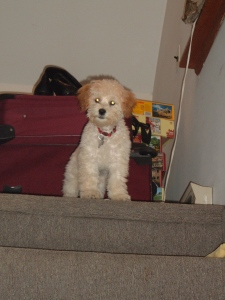 Baby Cricket, confused by the stairs