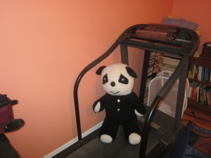 Panda, after plastic surgery, ready for physical therapy.