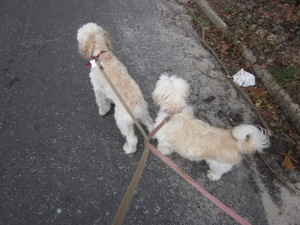 The knotted Leashes