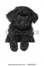 Baby Teddy looked something like this