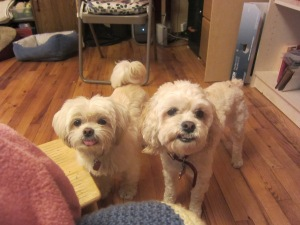 The girls are ready for their chicken treats, um, training session.