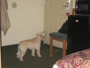 Cricket guarding the door to the motel room