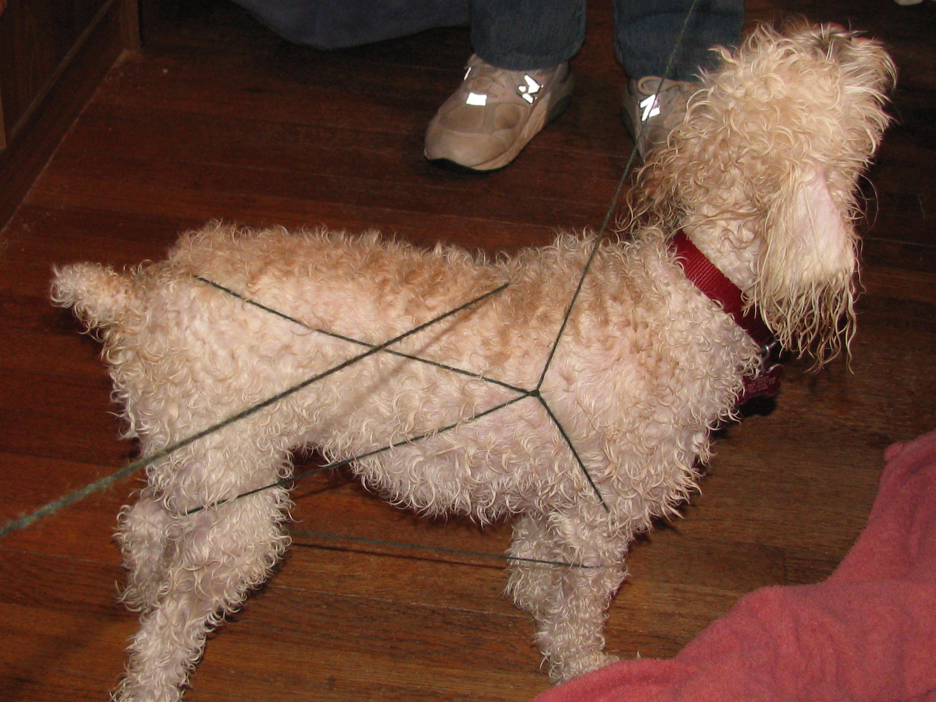 Dog knots man