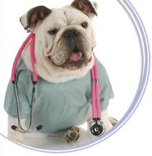 Doctor Dog (found online)!