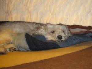 Cricket, under her couch