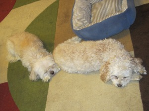 My girls, resting until duty calls.