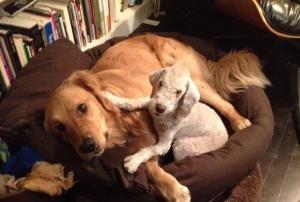 Mark Doty's dogs