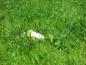 The bread in the grass.