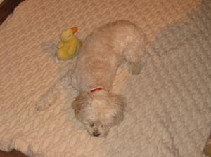 Cricket is ready for her treatment. Ducky too.