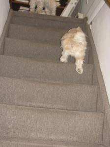 """Cricket? Are you upstairs?"""""""