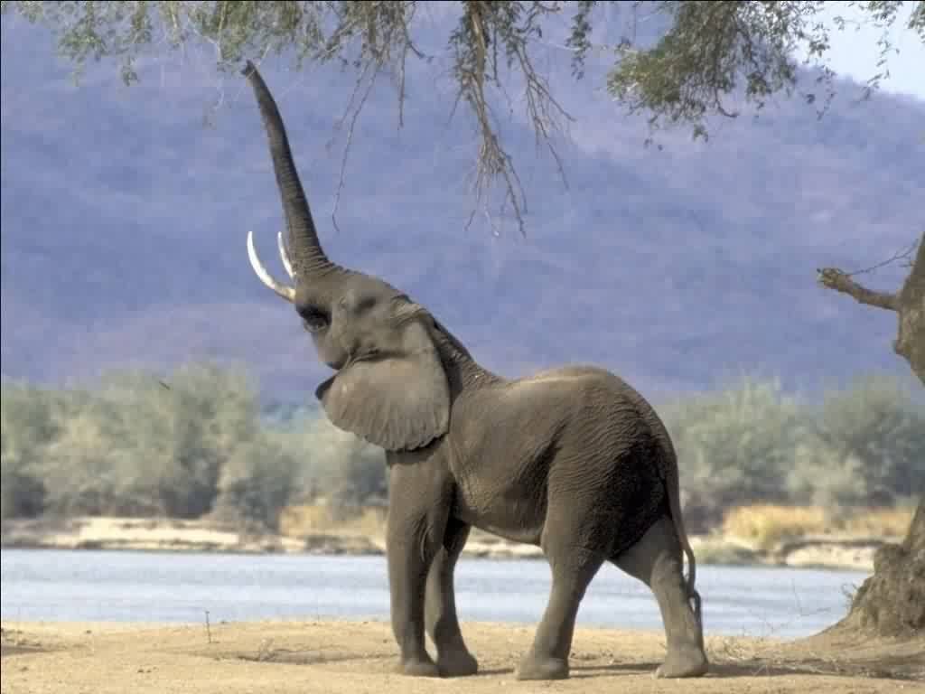 Happy Elephant! (not My Picture) Part 73