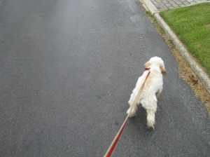 Cricket, leading the way, dragging me with her.