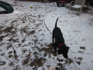 Lilah the Black Lab, and my niece, is an expert sniffer!