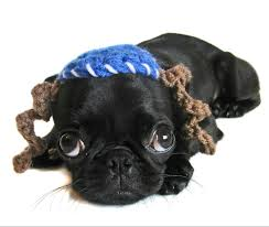 Google image of a Rabbinical dog. What do you think?