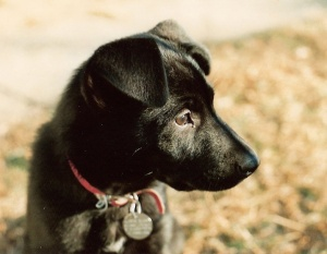 Dina as a puppy.