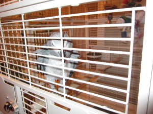 Isabel behind bars.