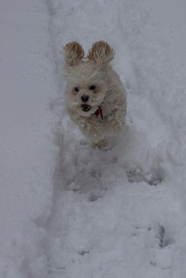 Cricket in snow 2