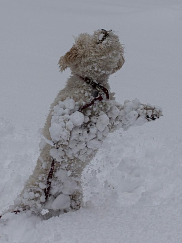 cricket snow 11
