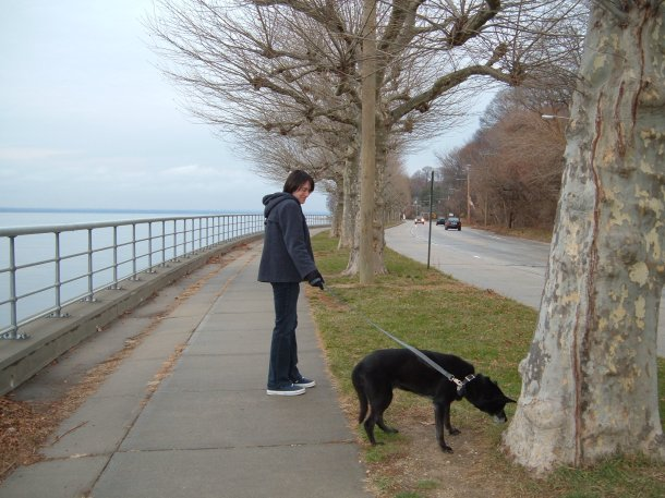 dina stops to sniff