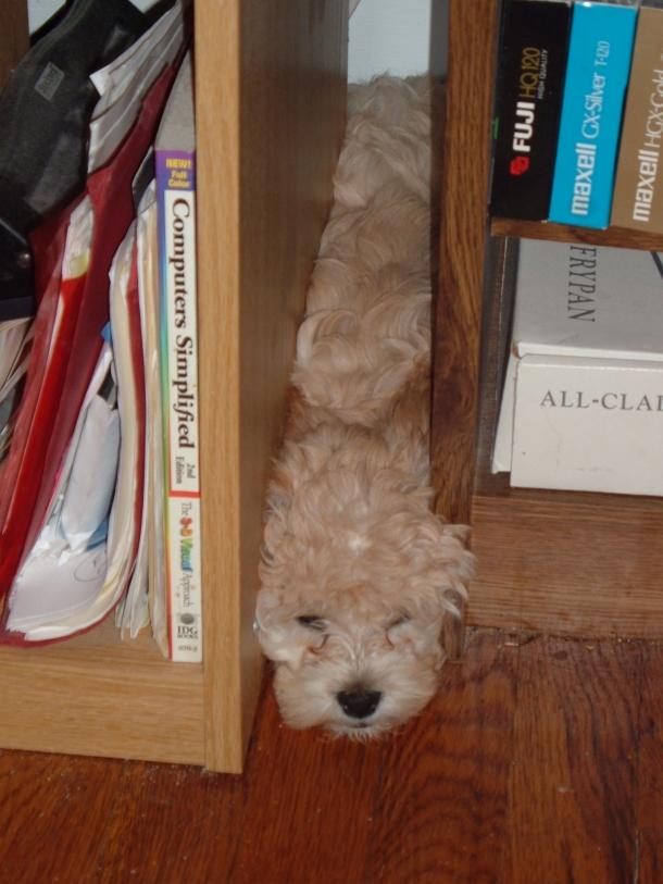 puppy-in-november-007