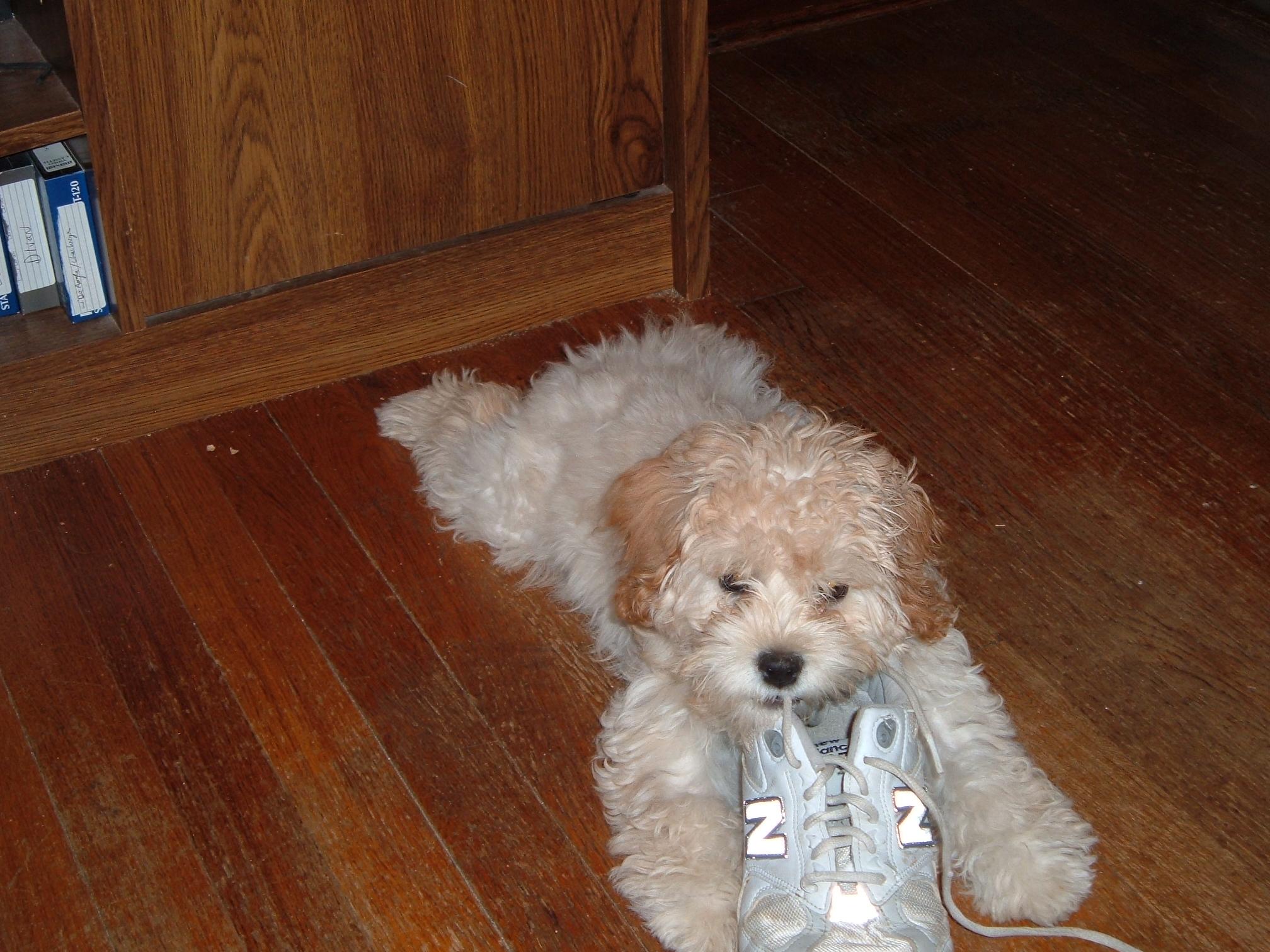 puppy-in-november-034
