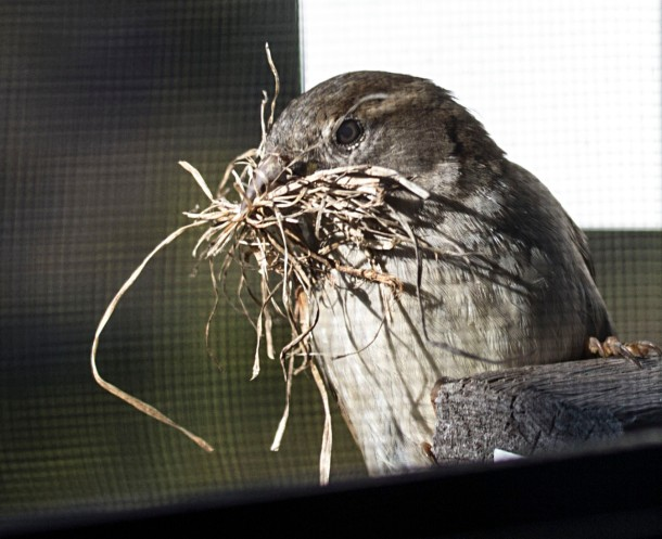 bird - more nest building