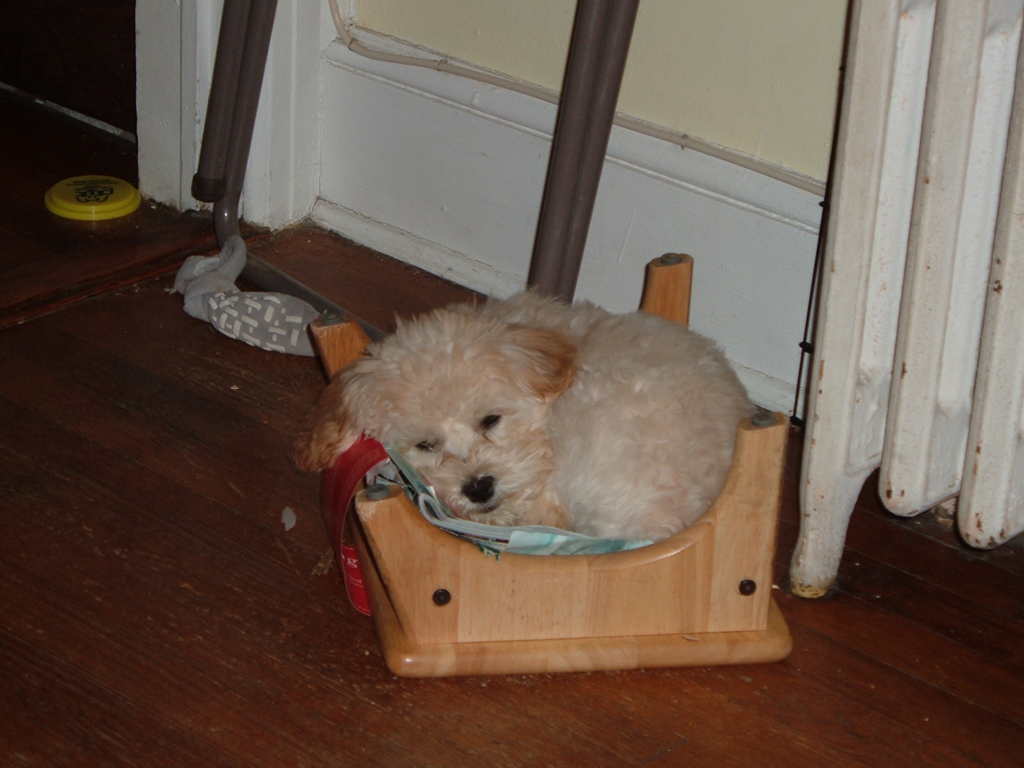 puppy in November 047