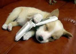 puppy with phone