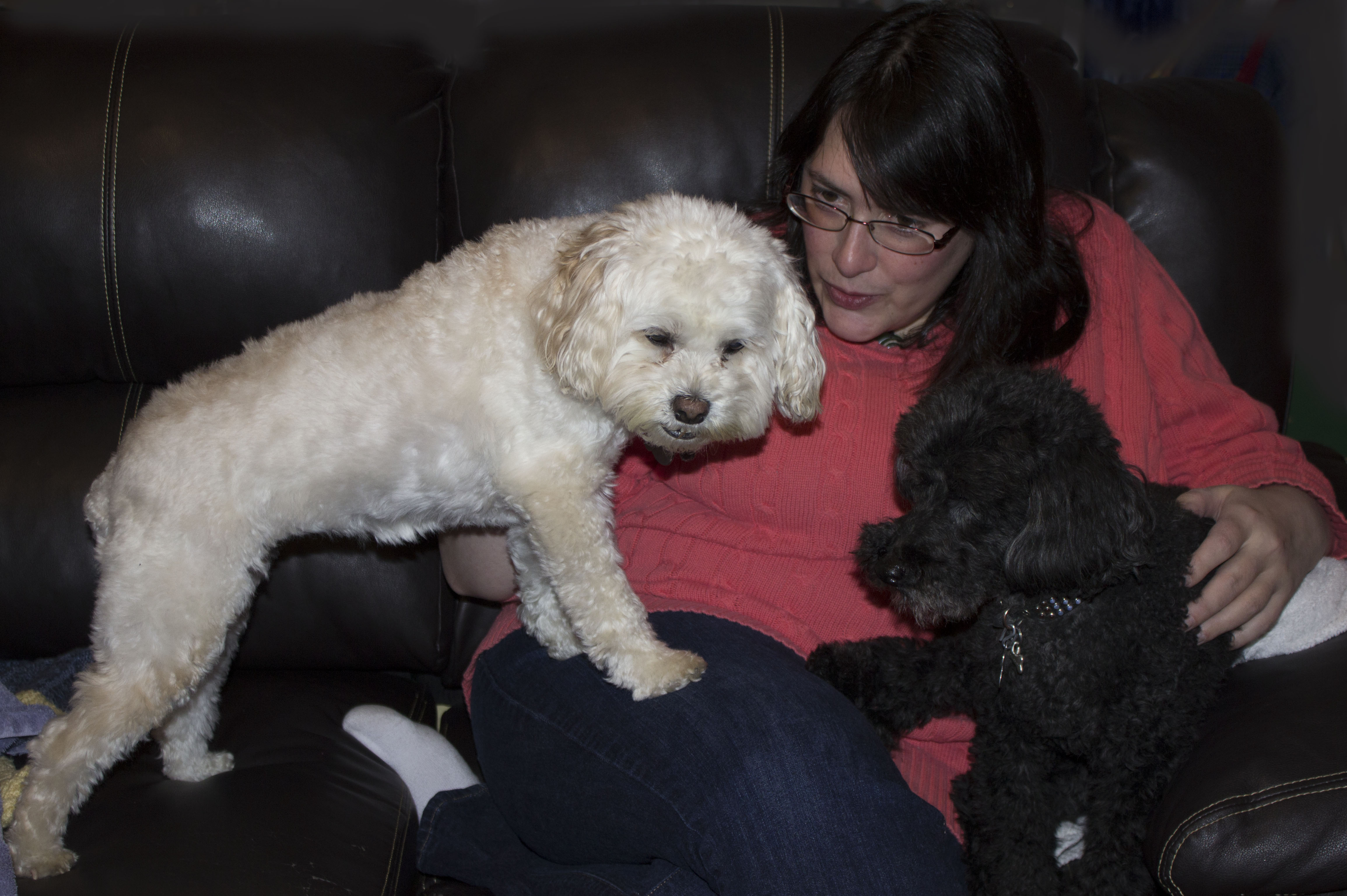 Rachel and the dogs
