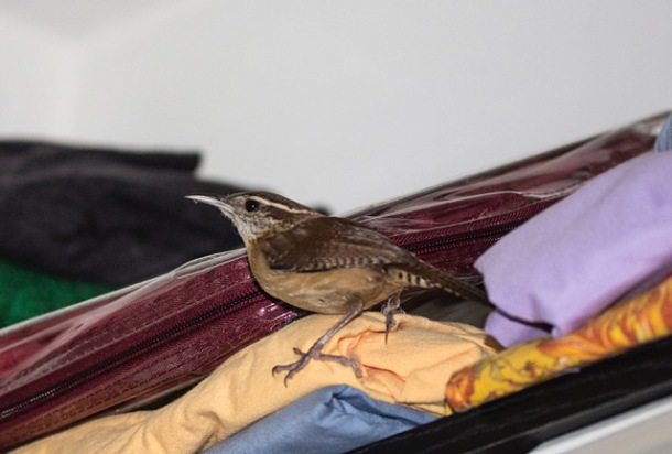 bird in the fabric closet 2