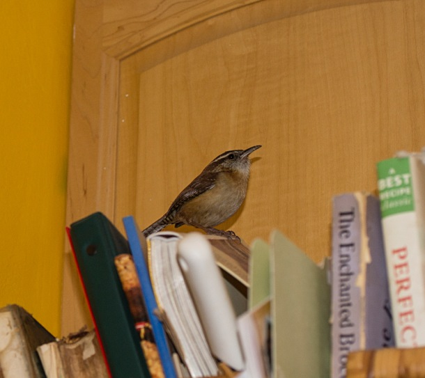 bird on cookbooks