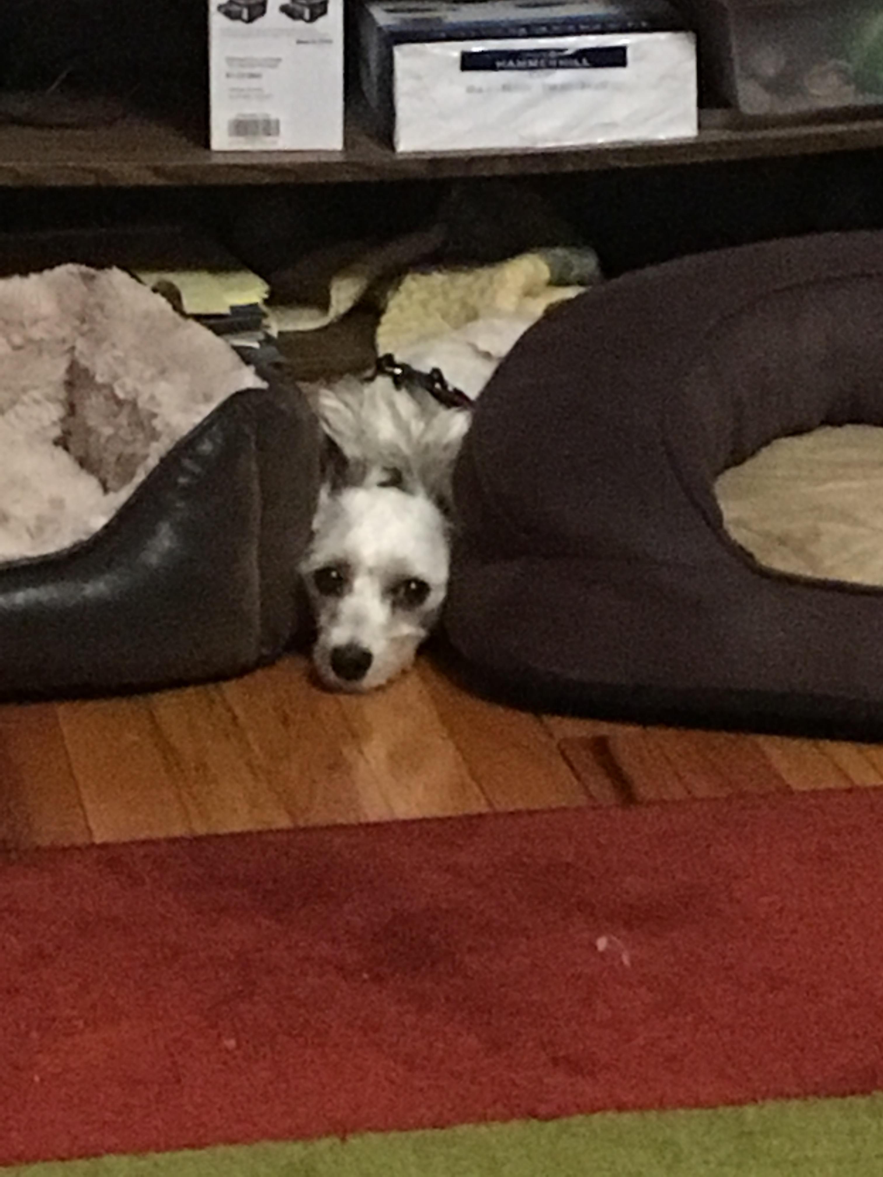 Ellie between two beds