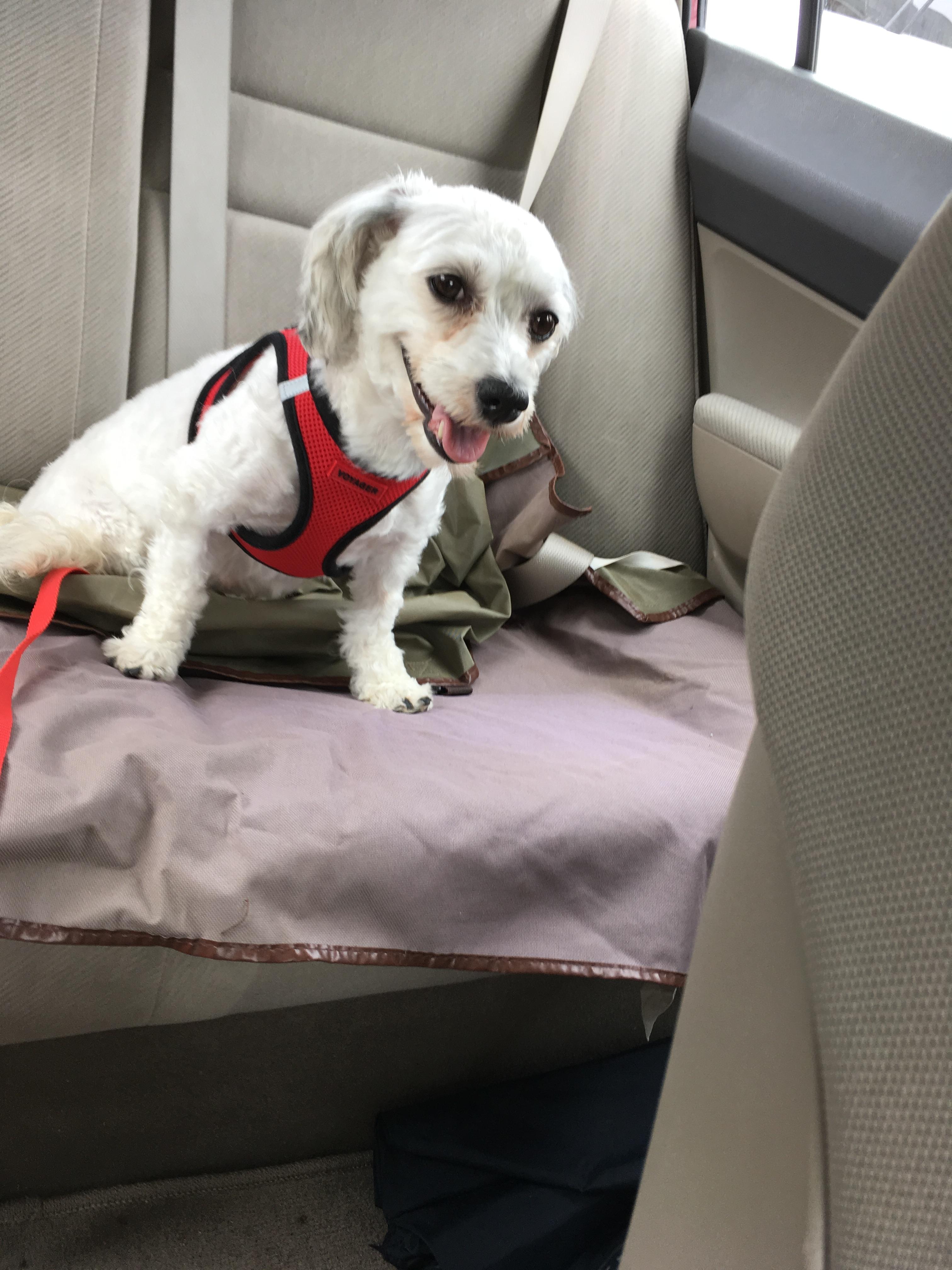 Ellie in the car