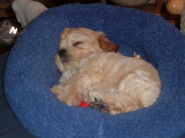 puppy in October 034