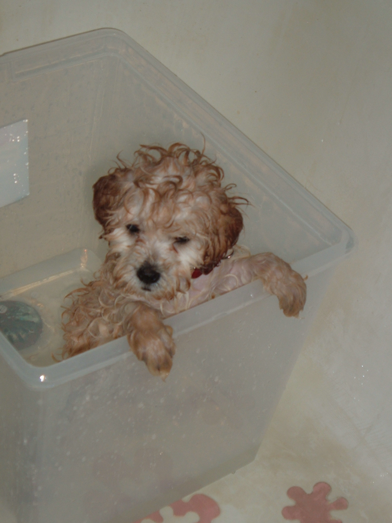 puppy in November 005