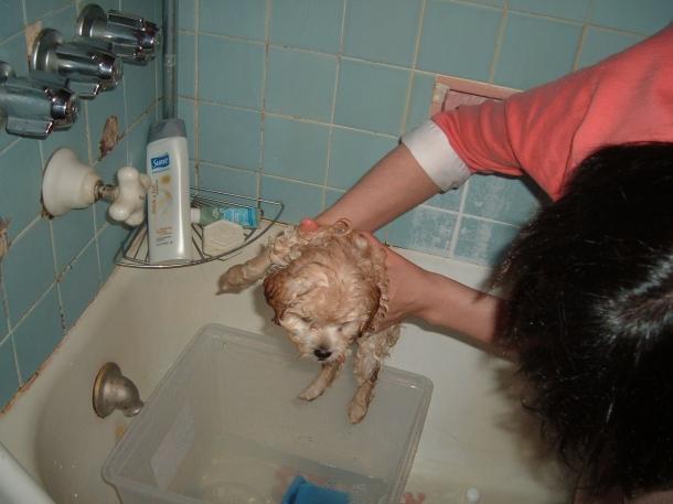 puppy in November 001