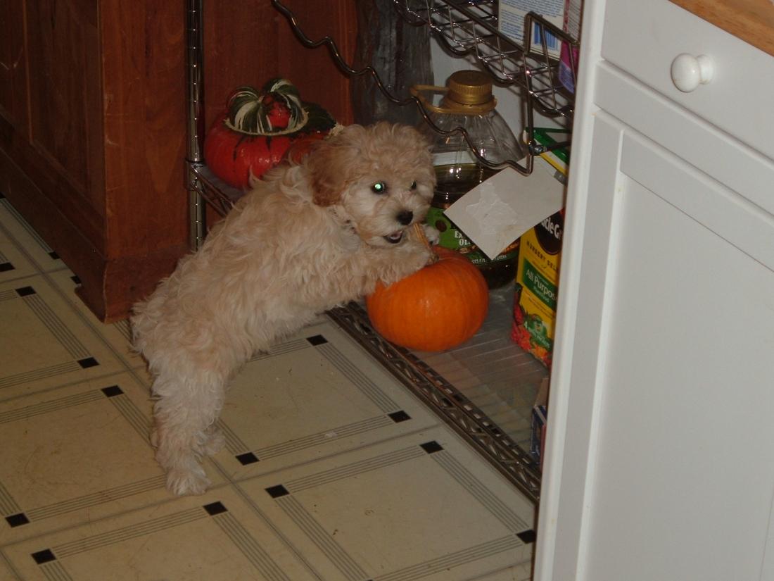 puppy in November 010