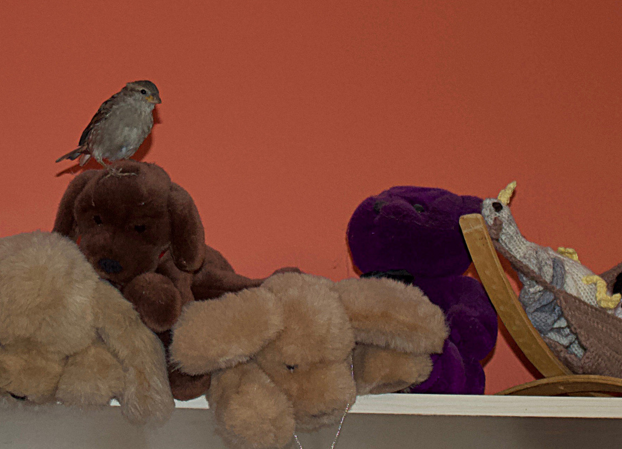 sparrow with stuffed animals
