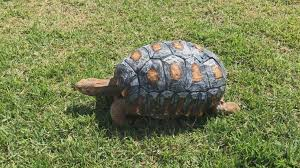 turtle with 3d shell