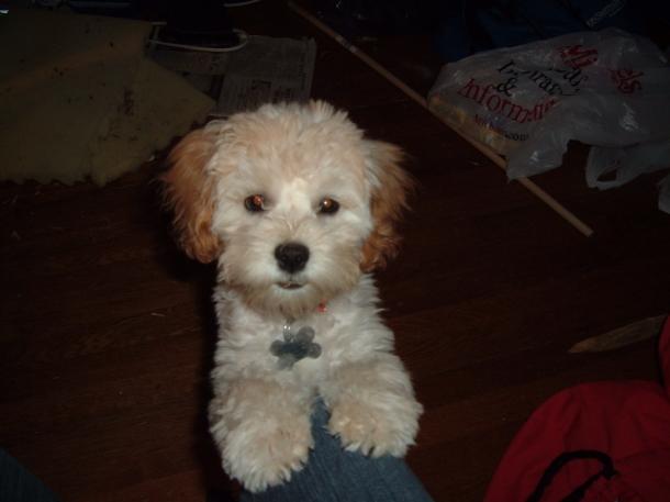 puppy in November 042